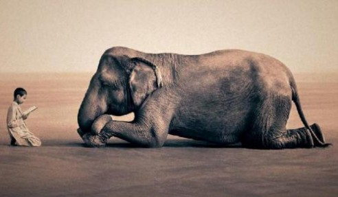Islam-Elephant-Feature-492x287.jpg
