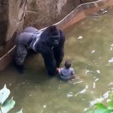 Gorillas in the Zoo with Tripp York