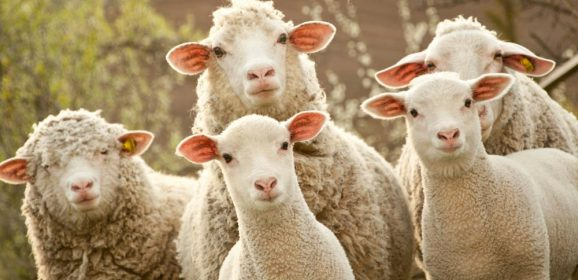 Models of Pastoral Leadership